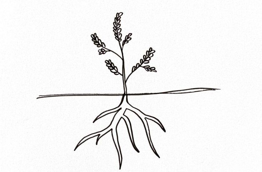 """Skizzierte Pflanze inklusiv Wurzeln unter der Erde als Symbol für Root Cause Problem Solving"""""""